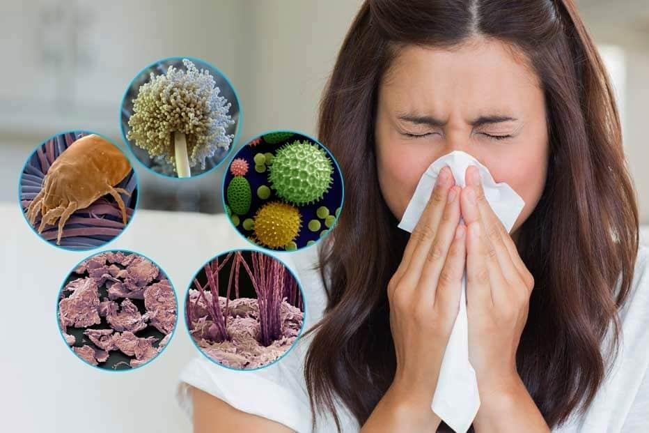 Не рубай тополю: звідки береться алергія?*