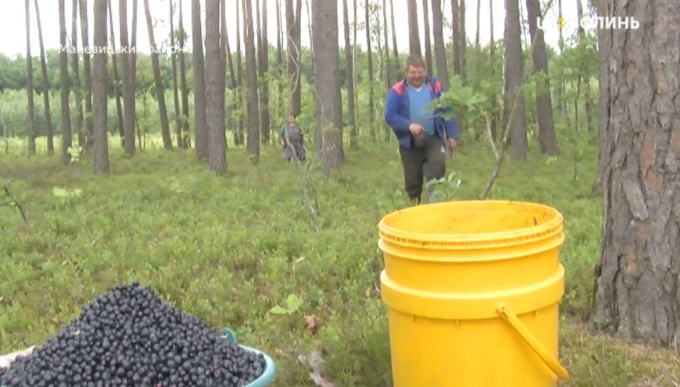 За використання лісів на Волині до бюджету сплатили понад 37 мільйонів