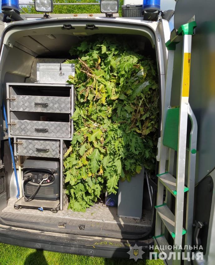 За добу на Волині виявили понад дві тисячі рослин маку та коноплі