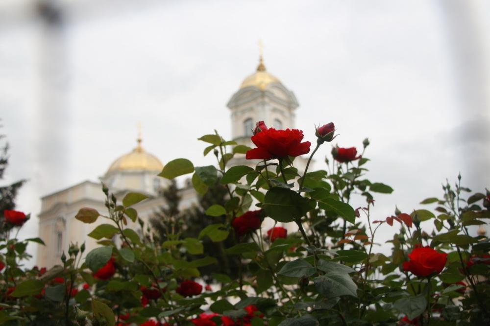 Біля луцького собору буяє тисяча троянд
