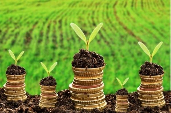 На Волині місцеві бюджети отримали понад 137 мільйонів гривень плати за землю
