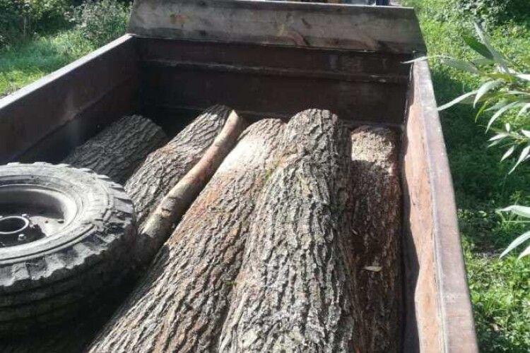 Лісопорушники на Волині завдали збитків на десятки тисяч гривень