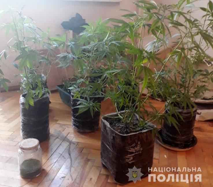 Лучанин на балконі багатоповерхівки вирощував марихуану
