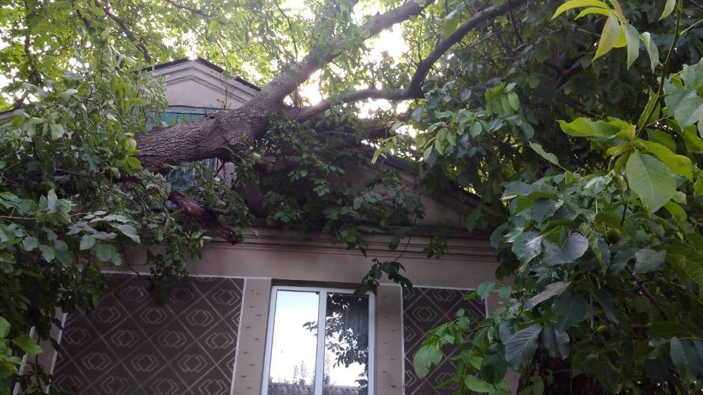 Негода на Волині: дерево впало на будинок