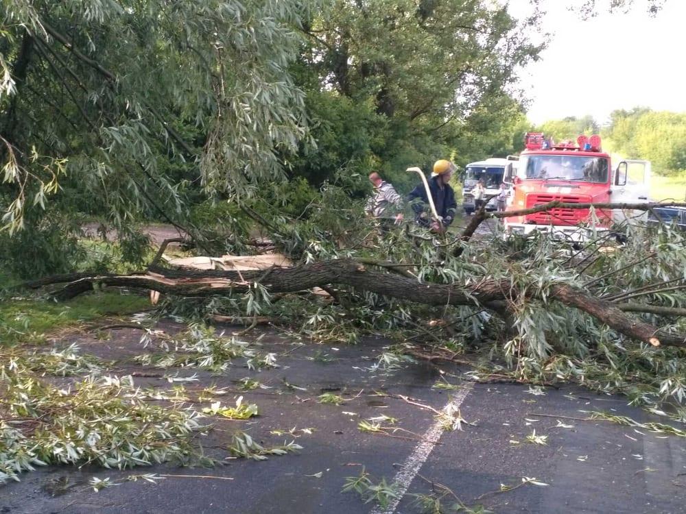 Повалені дерева та заблоковані дороги: на Волині ліквідовували наслідки негоди