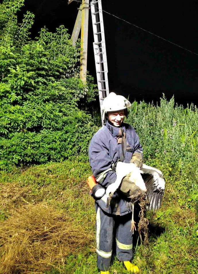 На Волині врятували лелеку