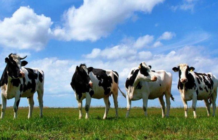 На Волині в одному із районів гинуть коні та корови