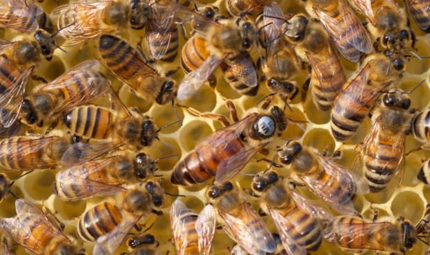 У Луцьку власники бджолосімей можуть отримати дотацію