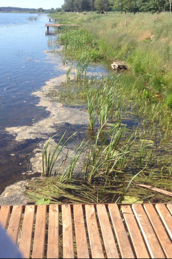 «Природа не пробачає подібного ставлення»: на Волині занепокоєні зливом нечистот у річку Турію