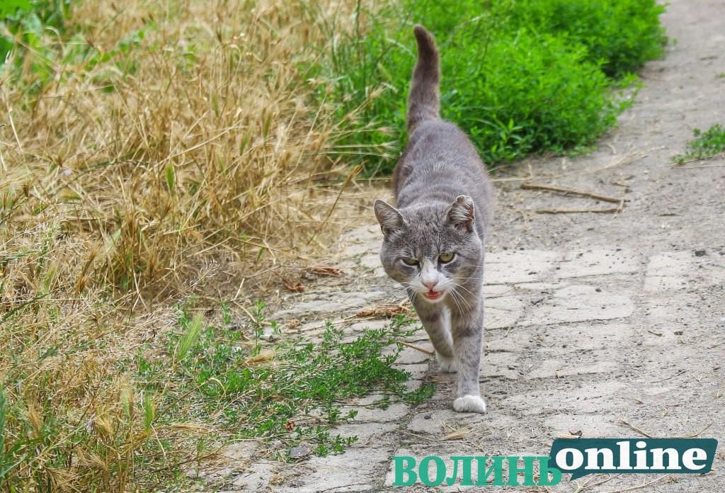 Котів у Луцьку захищатимуть від жорстокого поводження
