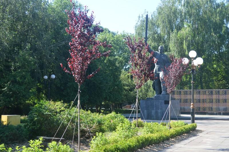 У місті на Волині висадили сотні дерев, кущів та багаторічних квітів