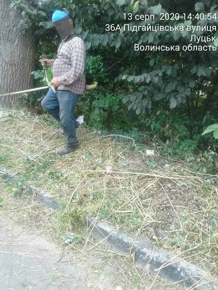 Лучан закликають повідомляти муніципалам про небезпечні рослини на території міста