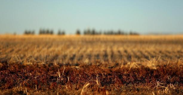 До місцевих бюджетів Волині сплатили майже 240 мільйонів гривень плати за землю