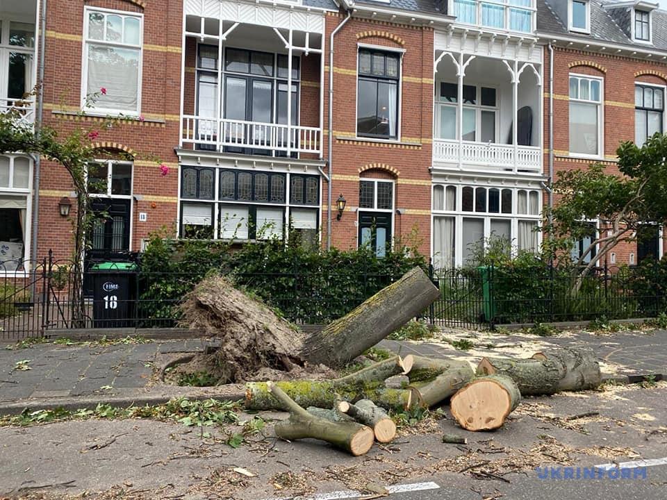 Потрощені дерева та авто: у Нідерландах вирував шторм Френсіс