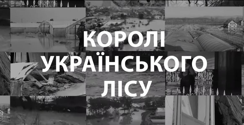 «Королі українського лісу»: незаконні вирубки лісів на Волині викрили у журналістському розслідуванні. ВІДЕО