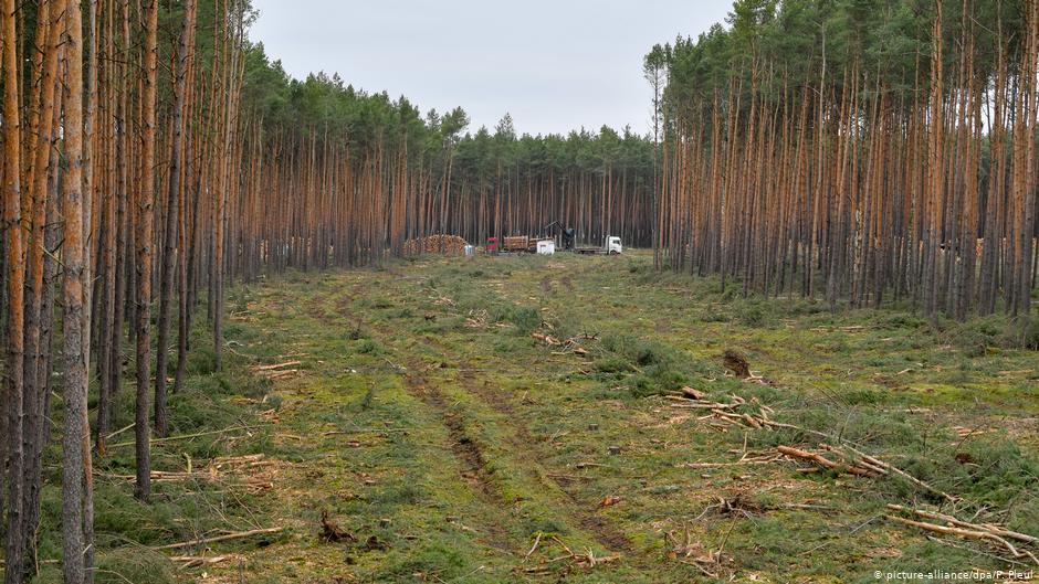 У Шацькому районі попередили незаконне використання ділянки лісу за 420 тисяч