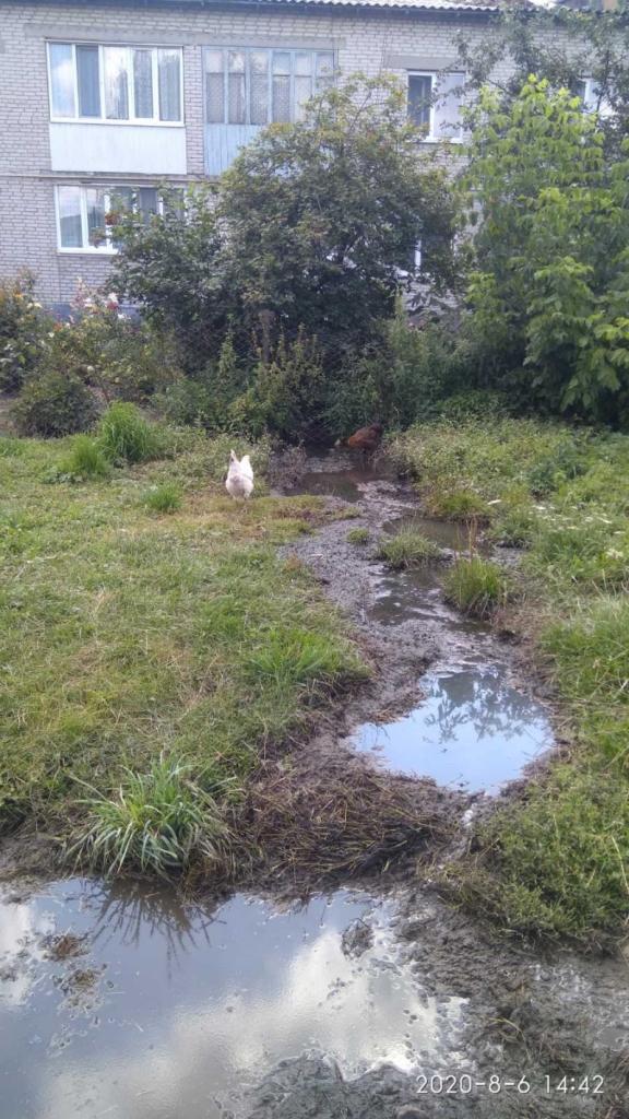 У громаді на Волині провели рейд щодо виявлення зливів нечистот