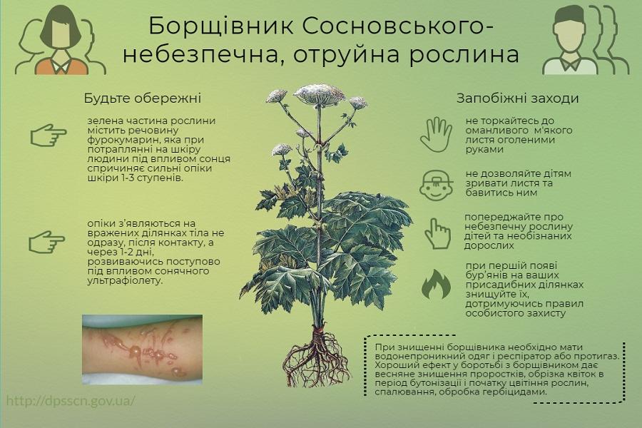 Жителів громади поблизу Луцька застерігають від отруйної рослини