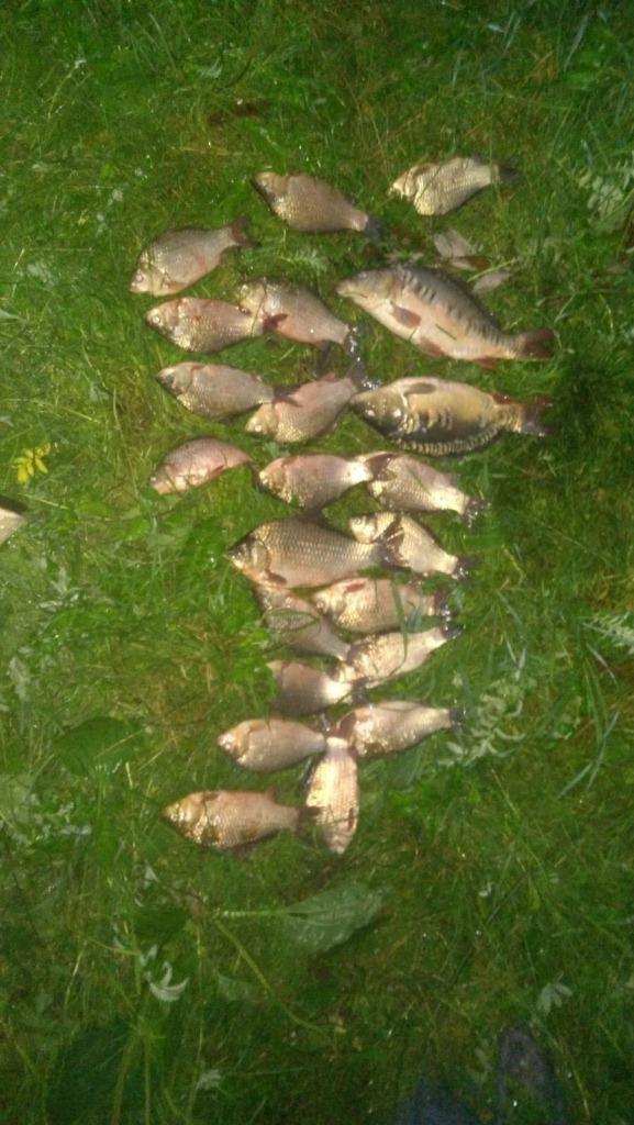 За день на Волині викрили низку грубих порушень правил рибальства
