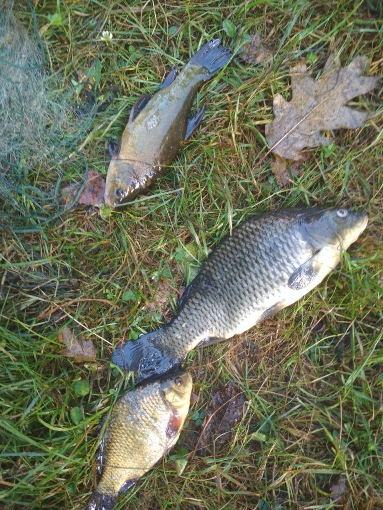 На одному з озер Волині викрили низку грубих порушень правил рибальства