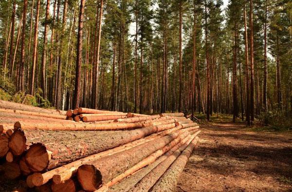 Лісові ресурси Волині додали бюджетам 48,9 мільйона гривень рентної плати