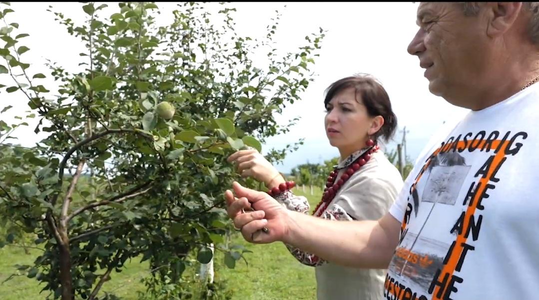 В ОТГ поблизу Луцька презентували відео про садівників громади