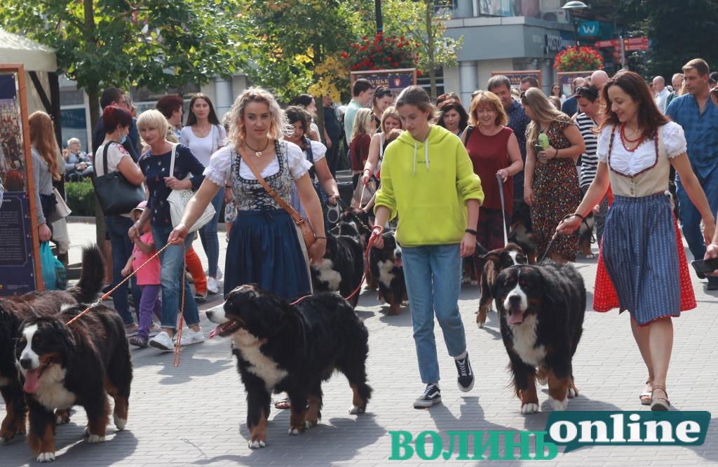 У центрі Луцька відбувся парад бернських зенненхундів