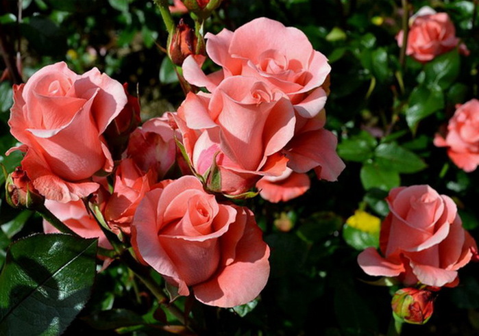 Волинянка через соцмережі продавала неіснуючі саджанці троянд