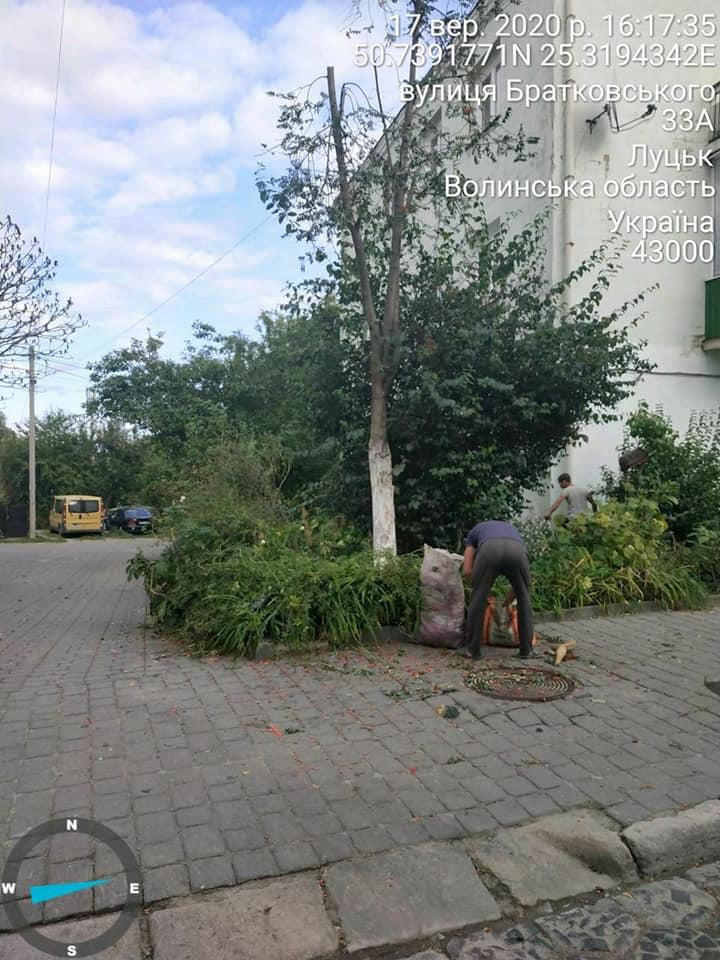 У Старому місті Луцька склали протокол на осіб, які пошкоджували дерева