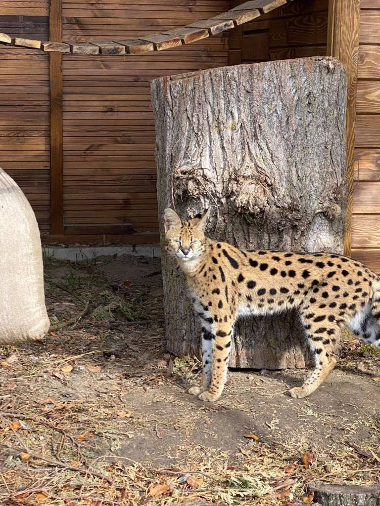 Як живуть нові мешканці Луцького зоопарку
