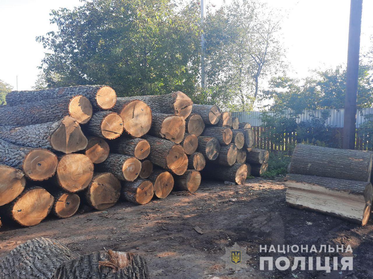 У Луцьку вилучили понад півсотні колод незаконно зрубаного дуба