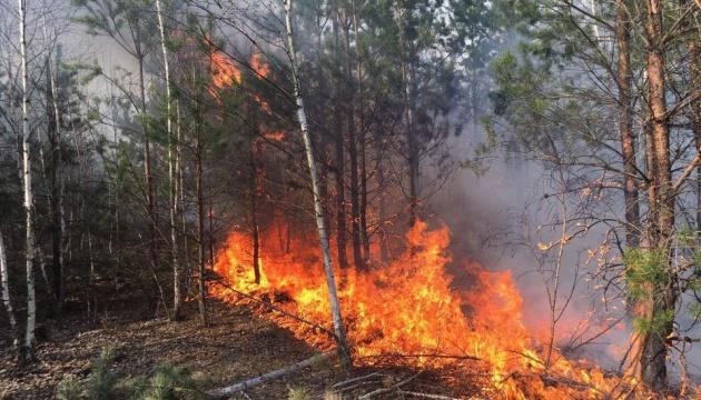 На Луганщині гасили масштабну лісову пожежу