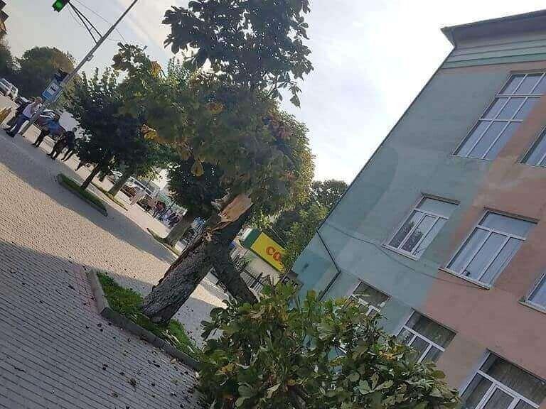 Повалені дерева на дорогах: наслідки негоди на Волині ліквідували рятувальники