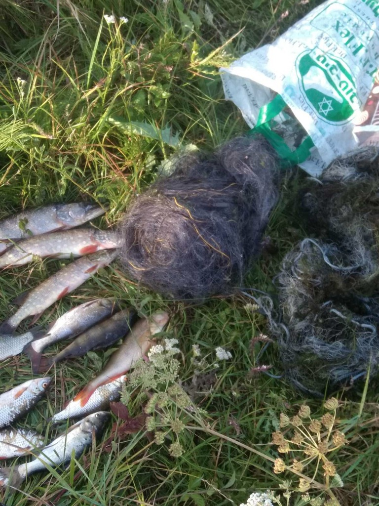В останній тиждень серпня на Волині викрили понад 10 порушень правил рибальства