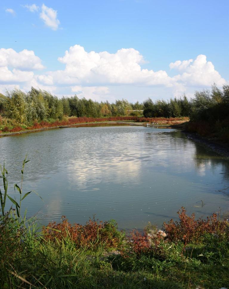 Як планують відновити водойму у Прилуцькому