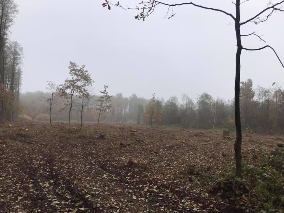 У нацпарку на Волині екоінспектори виявили понад 600 зрізаних дерев