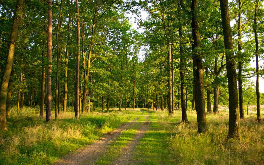 На Волині через суд державі повернули ділянку лісу вартістю понад два мільйони