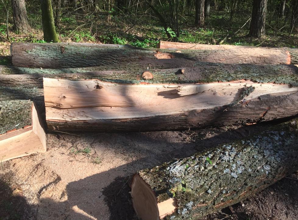 На Волині відкрили 149 кримінальних проваджень щодо незаконного обігу деревини