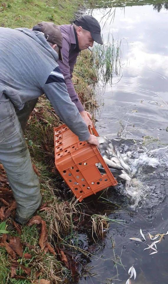 У канали центрального парку у Луцьку випустили 600 кілограмів білого амура