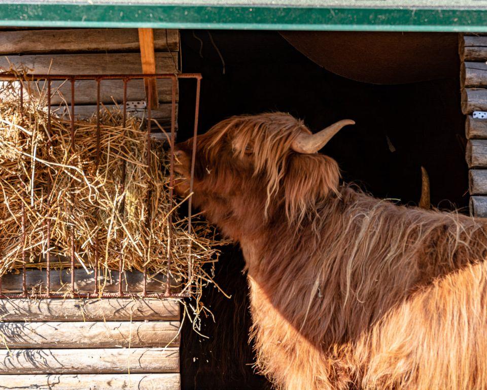 У Луцькому зоопарку нарікають на хамство відвідувачів