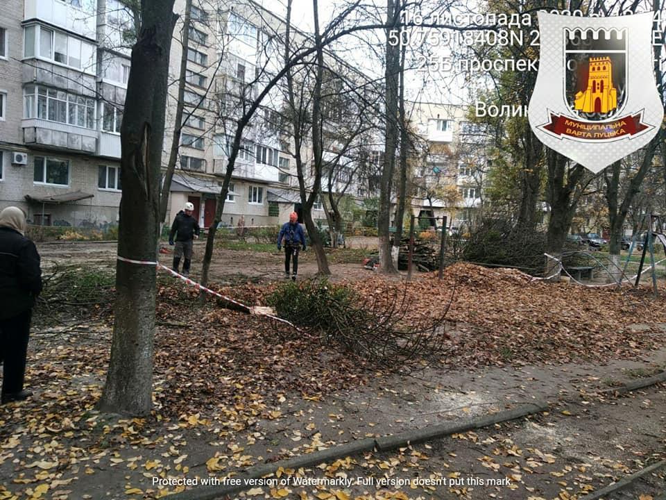 У Луцьку виявили незаконно зрізані дерева