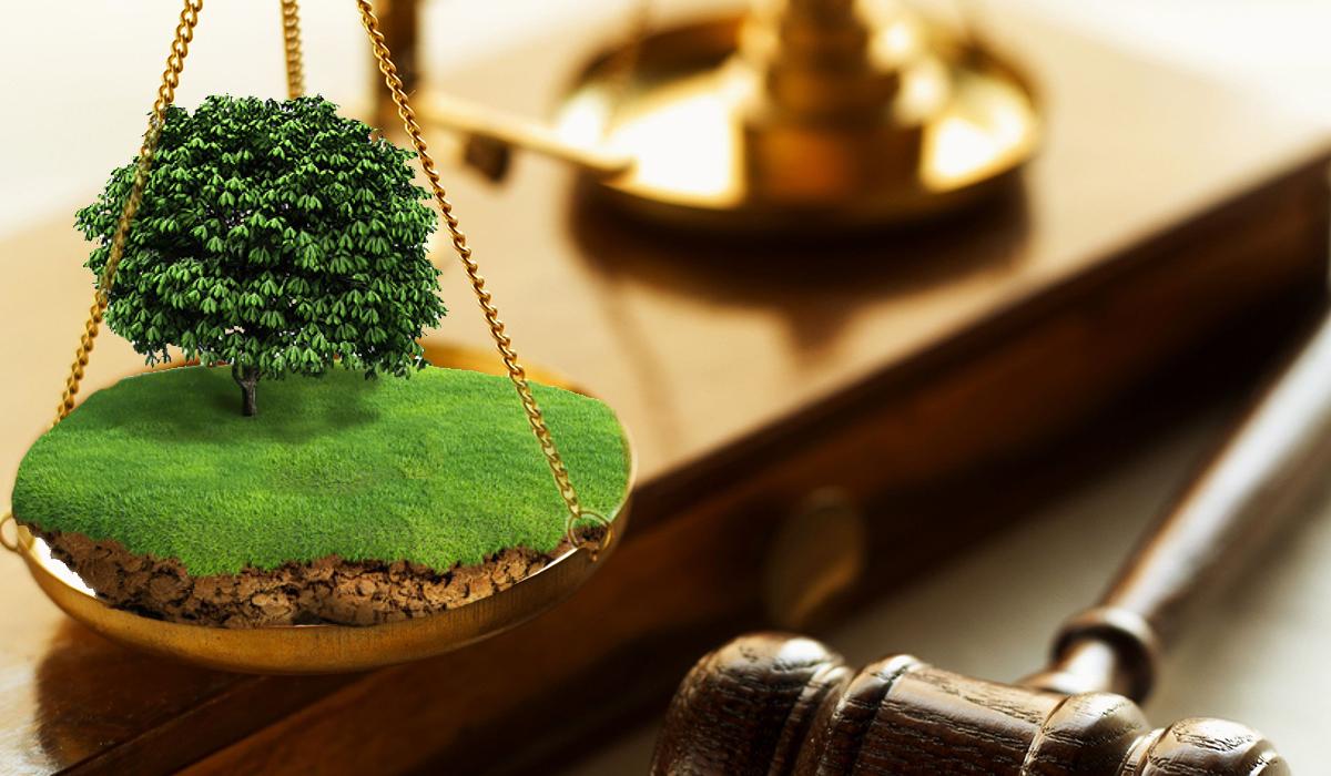 Суд зобов'язав підприємство звільнити самовільно зайняту земельну ділянку поблизу Шацьких озер