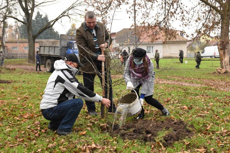 У Луцьку через зміни клімату висадили нетипові для Волині дерева