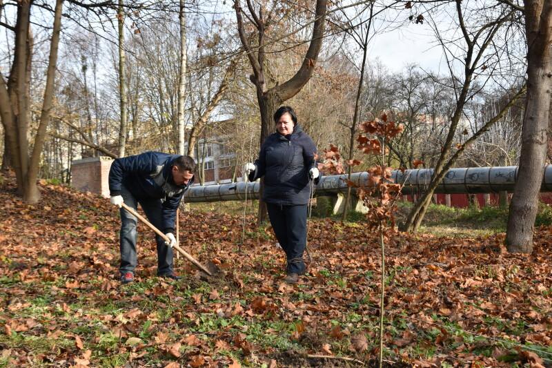 У ботанічному заказнику у Луцьку висадили 40 дубів