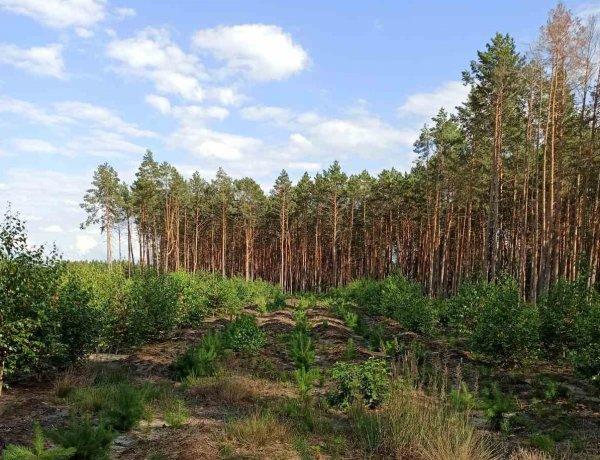 Лісгоспу на Волині передадуть в користування ділянки площею майже дві тисячі гектарів