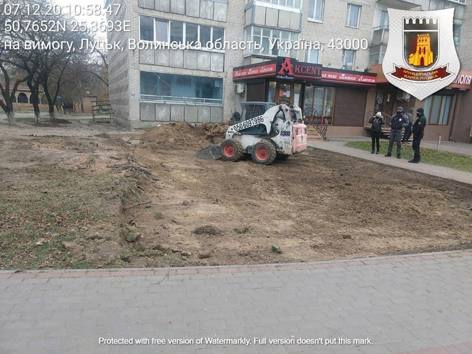 Незаконні земляні роботи: на проспекті у Луцьку знищили дерево