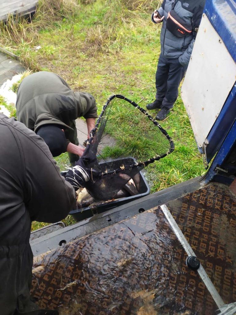 До водосховища на Волині вселили понад дві тонни цінних видів риб