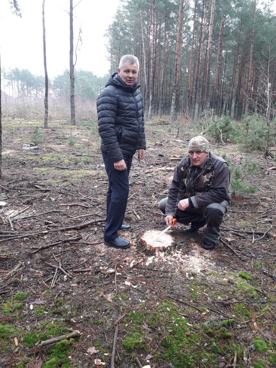 На Волині виявили незаконну рубку дерев