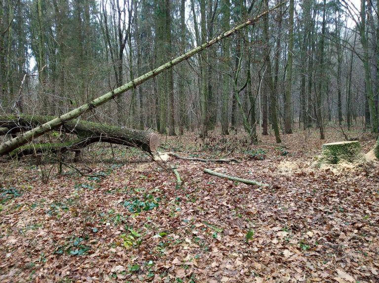 На Волині затримали автомобіль з незаконно добутою деревиною