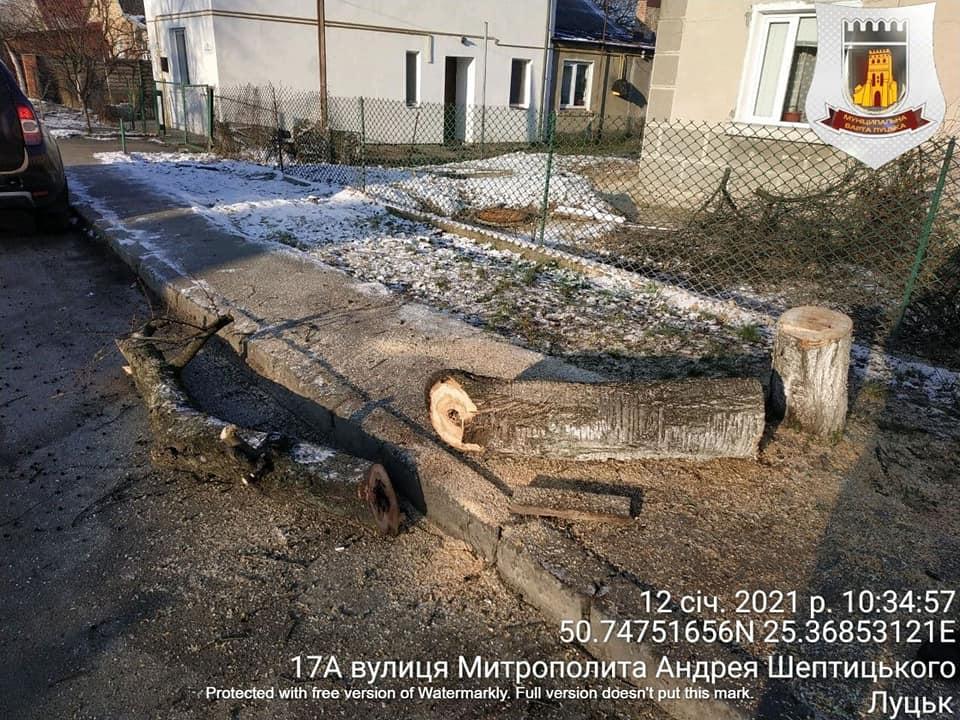Лучанина можуть оштрафувати за самовільне видалення дерева